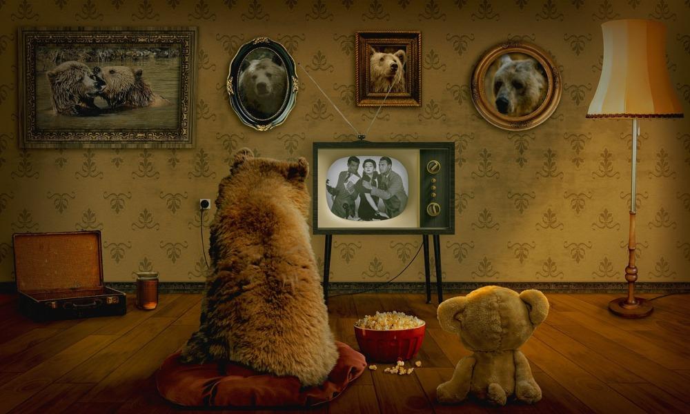 bear-3145874_1280
